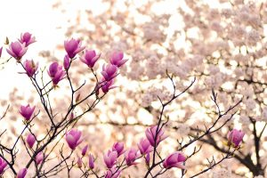 האביב, ההתחדשות, זו תזכורת נפלאה עבורנו ליצירת חידוש באחד מהתחומים בחיינו.