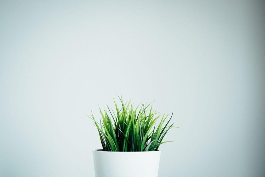 איך יוצרים צמיחה בעסק קטן? אלו צעדים ניתן לעשות באופן מהיר ומיידי עם תקציב מצומצם?
