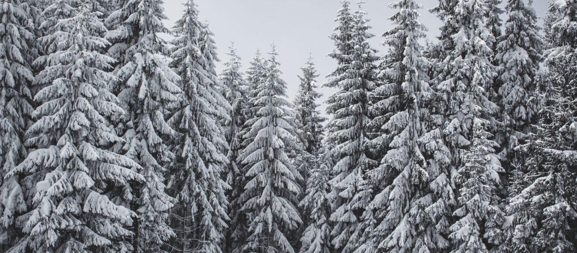 לפעמים האסטרטגיה הפרסומית כל כך חזקה כך שמרוב עצים לא רואים את היער, הגימיק מעפיל על המוצר